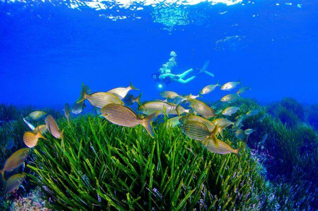 La Comunidad promociona la marca Costa Cálida como destino de buceo en el litoral Mediterráneo - 1, Foto 1