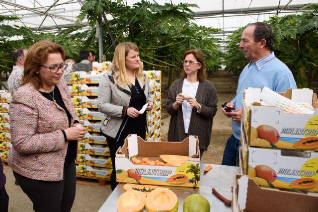 IMIDA y Ayuntamiento colaboran con productores agrícolas en la mejora de los cultivos tropicales, Foto 1