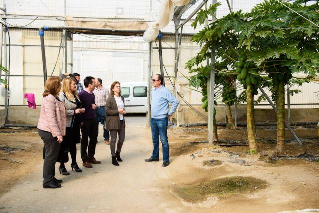 IMIDA y Ayuntamiento colaboran con productores agrícolas en la mejora de los cultivos tropicales, Foto 2
