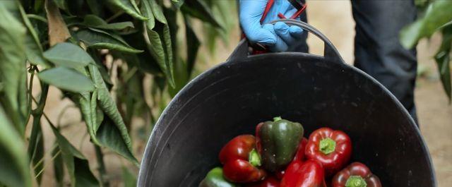 La agricultura, motor de futuro de la Región de Murcia - 1, Foto 1