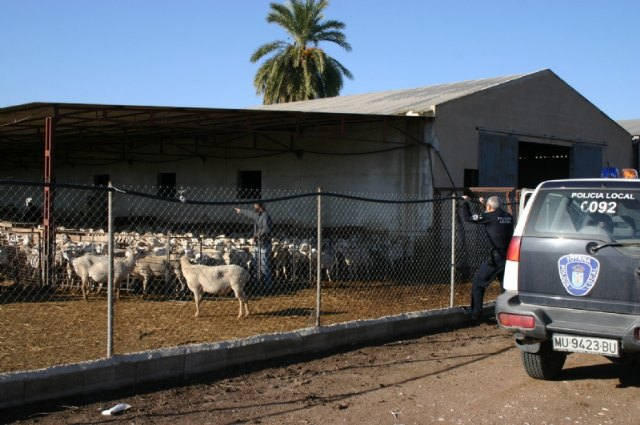 Declaration responsible for the justified movement of animal care or attention