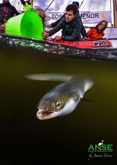 ANSE, Cofradía de Pescadores de San Pedro y WWF agradecen a la Guardia Civil la persecución de la pesca ilegal de anguila en el Mar Menor - 2, Foto 2