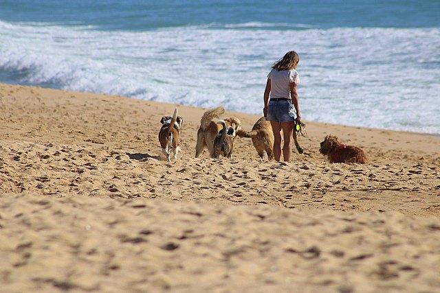 9 de cada 10 españoles prefieren ir de vacaciones con su perro - 1, Foto 1