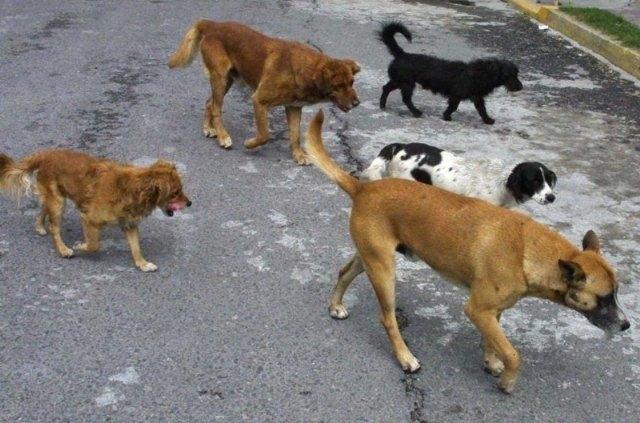 Contratan el servicio de recogida de animales abandonados o vagabundos y la gestión de animales muertos, Foto 1