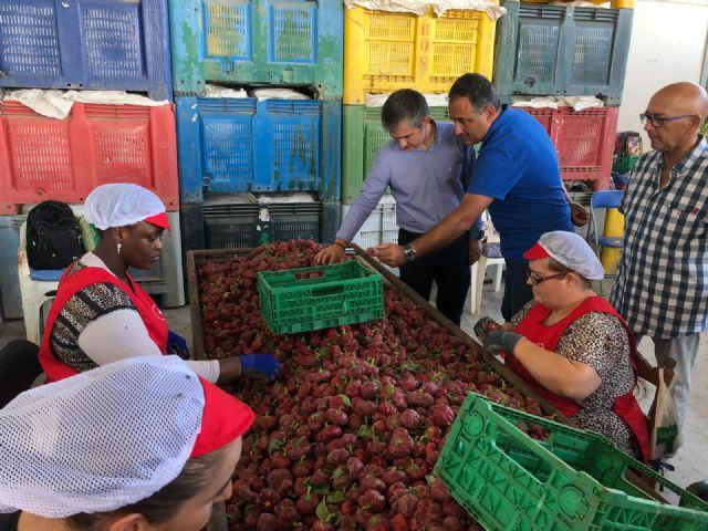 La Región produce el 22 por ciento de los pimientos de bola destinados a pimentón en España