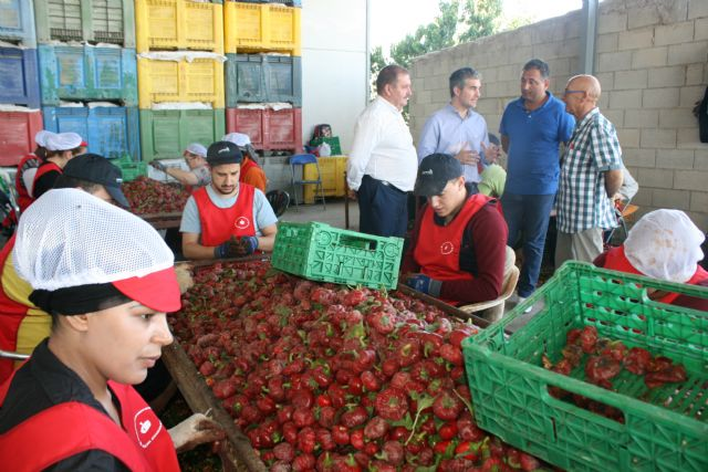 "Regional and local authorities visit the farms and processing and marketing facilities of the Pimentón Pepper Producers' Association ""Valle del Guadalentín"" of Totana, Foto 2"