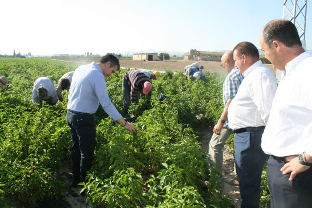 "Regional and local authorities visit the farms and processing and marketing facilities of the Pimentón Pepper Producers' Association ""Valle del Guadalentín"" of Totana, Foto 3"