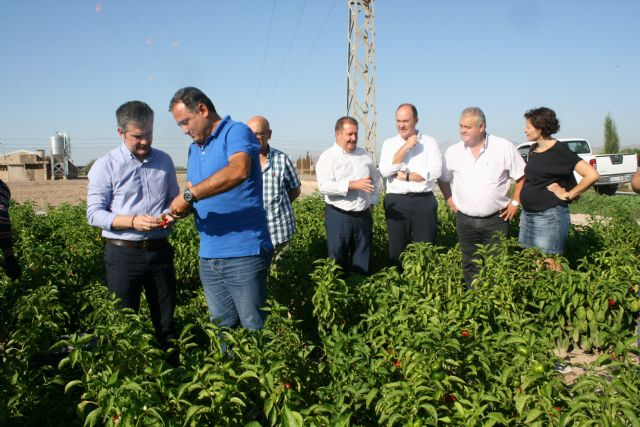 "Regional and local authorities visit the farms and processing and marketing facilities of the Pimentón Pepper Producers' Association ""Valle del Guadalentín"" of Totana, Foto 4"