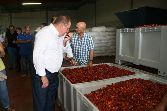"Regional and local authorities visit the farms and processing and marketing facilities of the Pimentón Pepper Producers' Association ""Valle del Guadalentín"" of Totana, Foto 5"