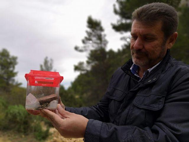 Liberan 15 ejemplares de sapo partero bético en Sierra Espuña tras desarrollarse en un acuario para asegurar su supervivencia, Foto 2