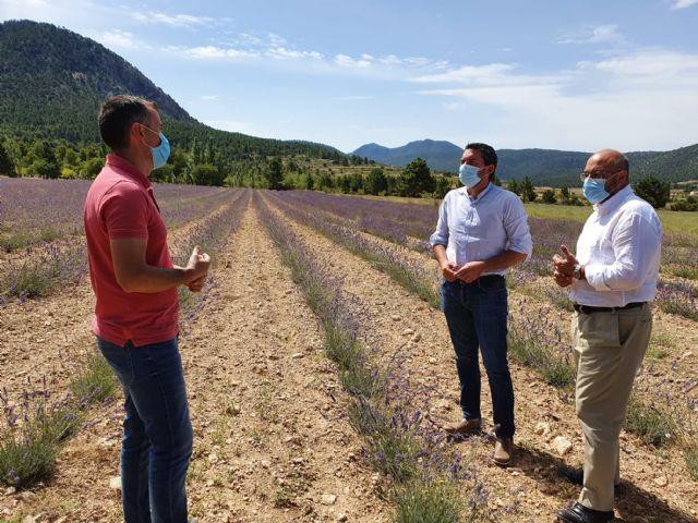 Agricultura apuesta por el cultivo de aromáticas como medida de generación de empleo y fijación de población en zonas rurales, Foto 1
