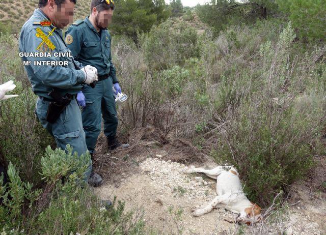 La Guardia Civil investiga a cinco personas por el uso de cebos envenenados en el Parque Regional Sierra de la Pila - 3, Foto 3