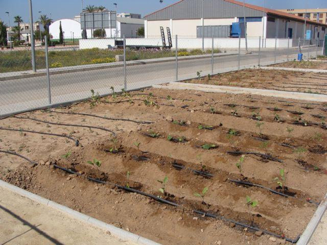 El Ayuntamiento abre un proceso participativo para el reglamento de uso de los huertos ecológicos urbanos - 2, Foto 2