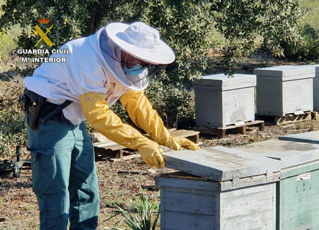 La Guardia Civil investiga a un apicultor de Jumilla por el uso ilegal de medicamentos en 230 colmenas - 2, Foto 2