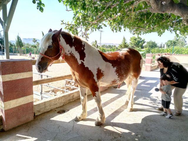 Terapia con caballos para estimular el desarrollo infantil, Foto 9