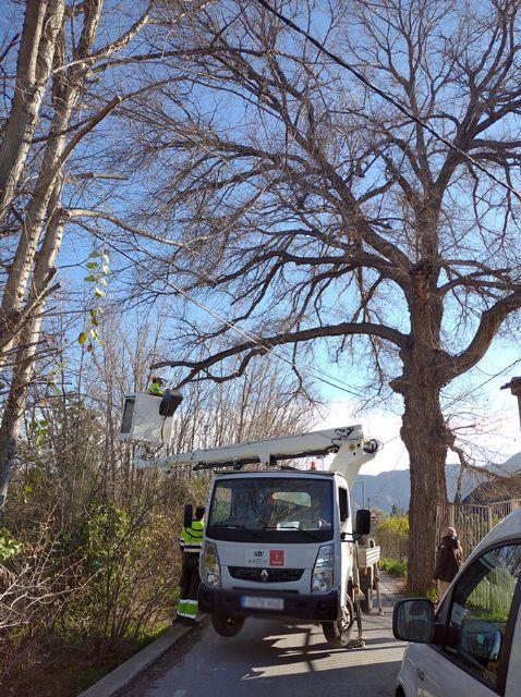 El Ayuntamiento revisa sus 700 ejemplares singulares ante la llegada de las altas temperaturas - 2, Foto 2