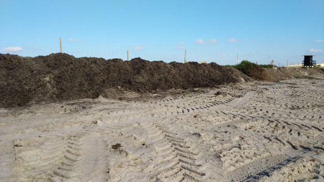 El Ayuntamiento traslada arribazones de posidonia hasta la Playa de la Llana para frenar la erosión litoral - 2, Foto 2