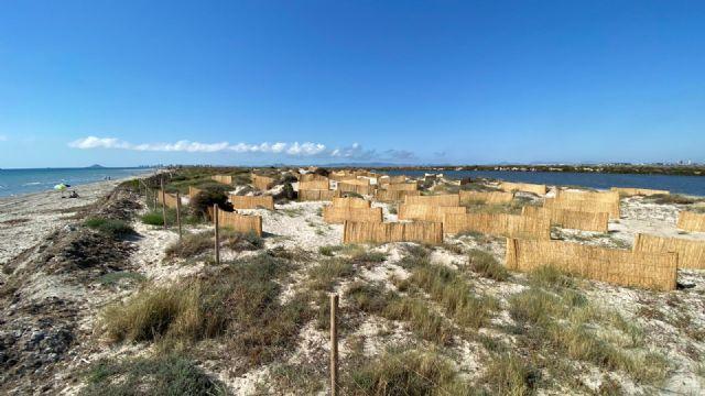 El Ayuntamiento traslada arribazones de posidonia hasta la Playa de la Llana para frenar la erosión litoral - 3, Foto 3