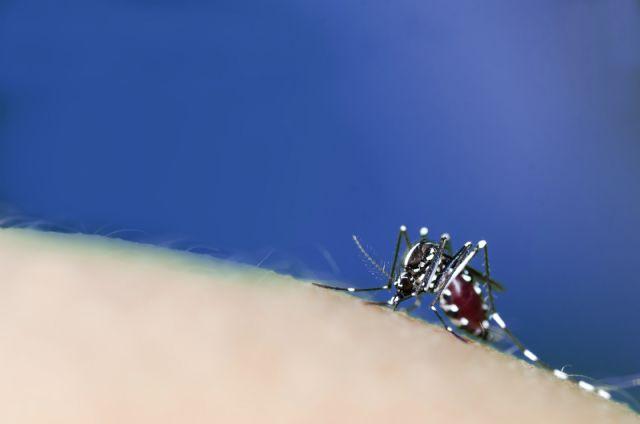 El mosquito tigre duplica su presencia y se expande por toda España este verano - 1, Foto 1