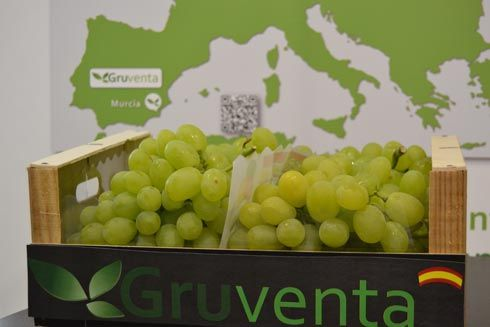 """Gruventa valora como """"formidable"""" en calidad la campaña de uvas apirenas - 1, Foto 1"""