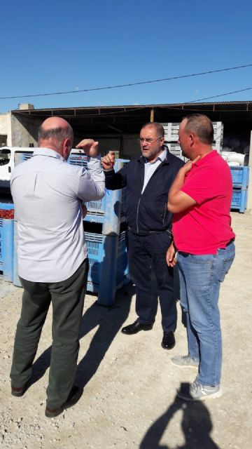 Álvarez Castellanos, Coordinador Regional de IU en la Región de Murcia, visita en Totana una empresa productora de pimiento para pimentón