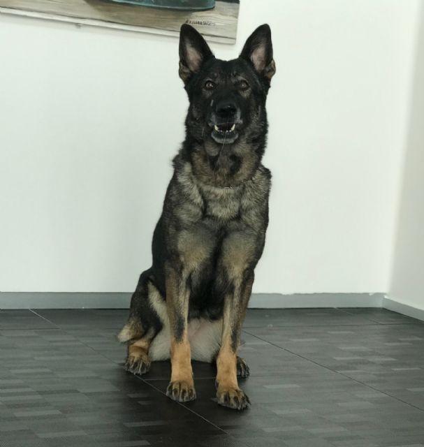 Campeonato de España de Adiestramiento Canino en Dolores de Pacheco - 1, Foto 1