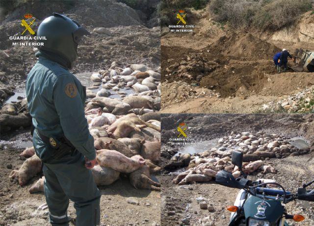 La Guardia Civil esclarece un delito contra los recursos naturales y el medio ambiente en una granja de cerdos de Mazarrón - 1, Foto 1