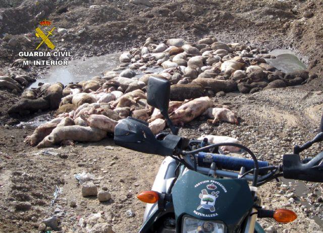 La Guardia Civil esclarece un delito contra los recursos naturales y el medio ambiente en una granja de cerdos de Mazarrón - 2, Foto 2