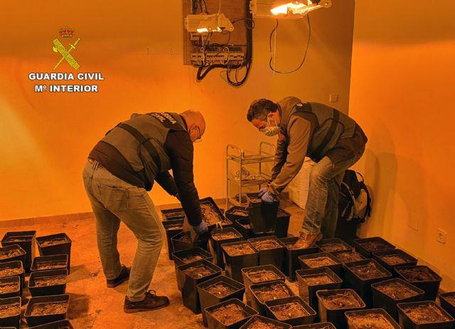 La Guardia Civil desmantela un punto de cultivo de marihuana en un chalet de La Manga - 1, Foto 1
