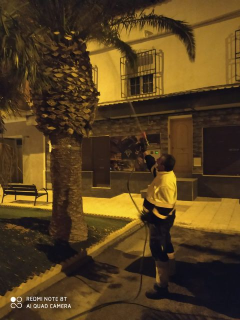 El Ayuntamiento de Puerto Lumbreras continúa la campaña de prevención contra la procesionaria y el picudo rojo en pinos y palmeras del municipio - 2, Foto 2