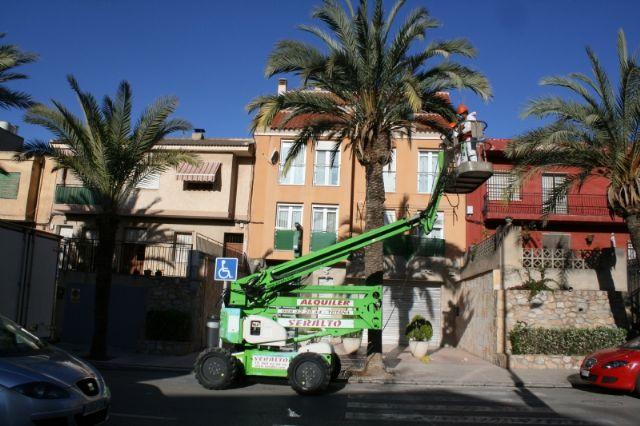 Mañana se cortará al tráfico la avenida de Lorca durante la mañana martes por trabajos de tala y poda de la población de palmeras