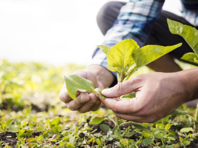 La propiedad intelectual en plantas y semillas, factor clave de la competitividad agraria - 1, Foto 1