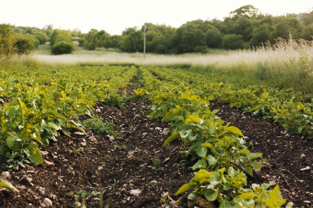 La propiedad intelectual en plantas y semillas, factor clave de la competitividad agraria - 2, Foto 2