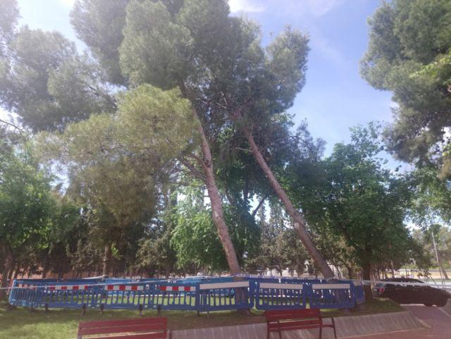 Las lluvias del 10 de mayo obligan a talar dos pinos en el jardín de San Cristóbal, Foto 1