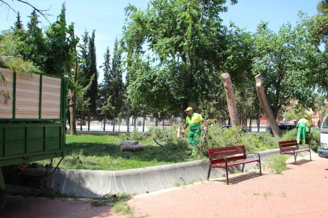 Las lluvias del 10 de mayo obligan a talar dos pinos en el jardín de San Cristóbal, Foto 2