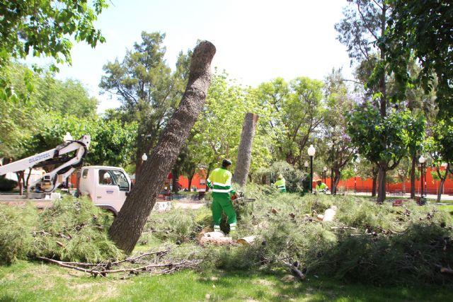 Las lluvias del 10 de mayo obligan a talar dos pinos en el jardín de San Cristóbal, Foto 3
