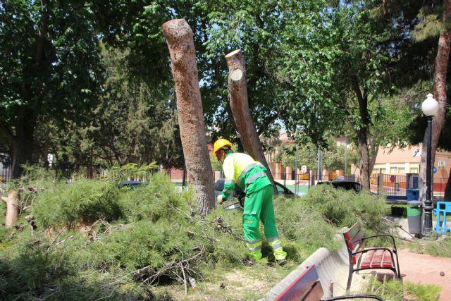Las lluvias del 10 de mayo obligan a talar dos pinos en el jardín de San Cristóbal, Foto 4