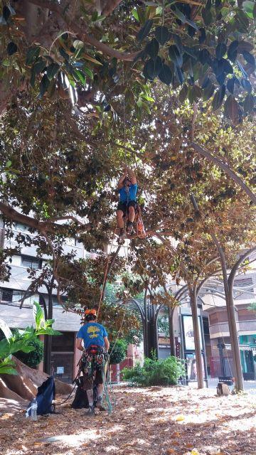 La Poda Extraordinaria Permite Sanear En Profundidad El Ficus De