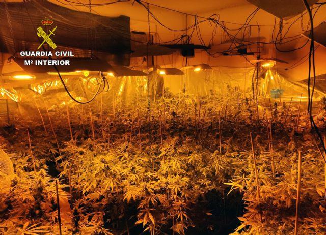 La Guardia Civil desmantela un invernadero de marihuana con más de 200 plantas en Fortuna - 3, Foto 3