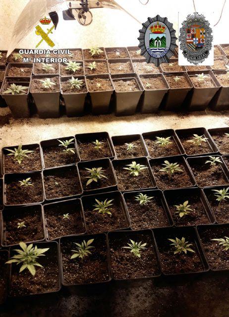 Desmantelada en Abanilla una plantación indoor con cerca de 300 plantas de marihuana - 1, Foto 1