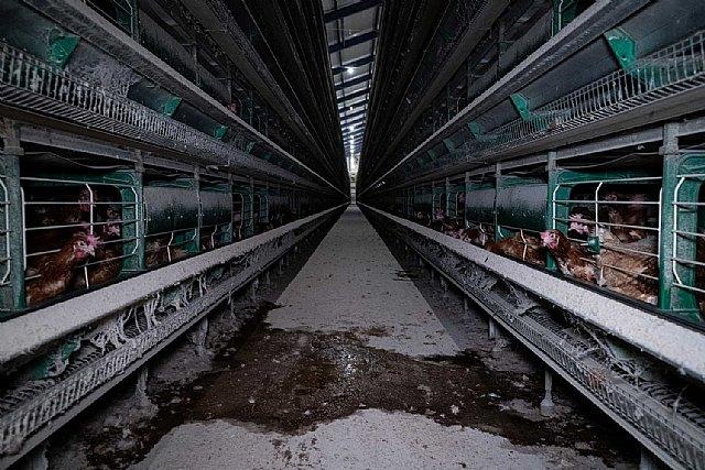 Supermercados Consum se compromete a dejar de vender huevos procedentes de gallinas en jaulas a partir de 2025 - 1, Foto 1