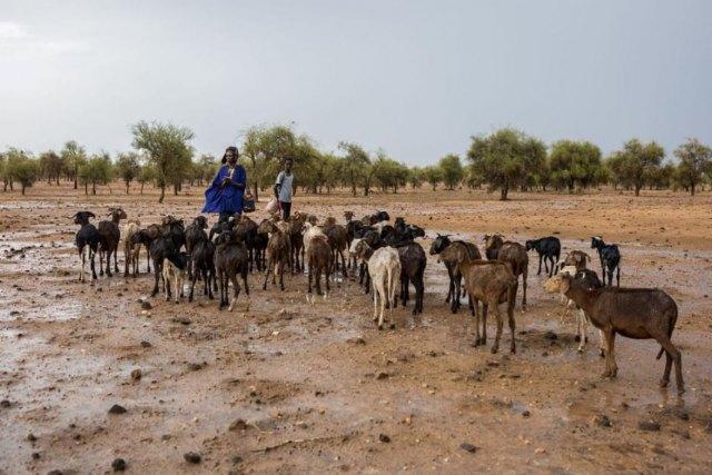 Inteligencia artificial para luchar contra el cambio climático en Sahel - 1, Foto 1
