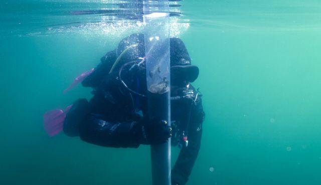 Analizan las consecuencias de la presión humana en el Mar Menor - 1, Foto 1