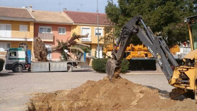 Se traslada un gran ejemplar de Ficus Australis al Jardín Paco Rabal, Foto 2