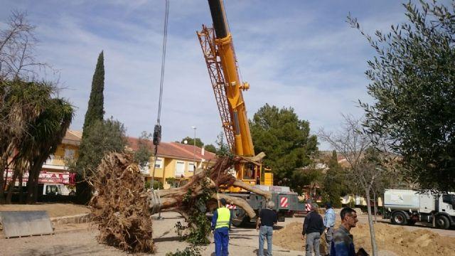 Se traslada un gran ejemplar de Ficus Australis al Jardín Paco Rabal, Foto 3