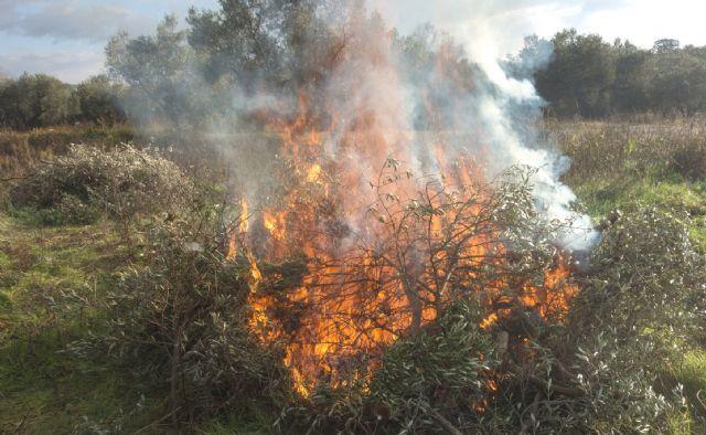 Se prohíben las quemas agrícolas y sólo se autorizan de forma excepcional por un riesgo fitosanitario comprobado