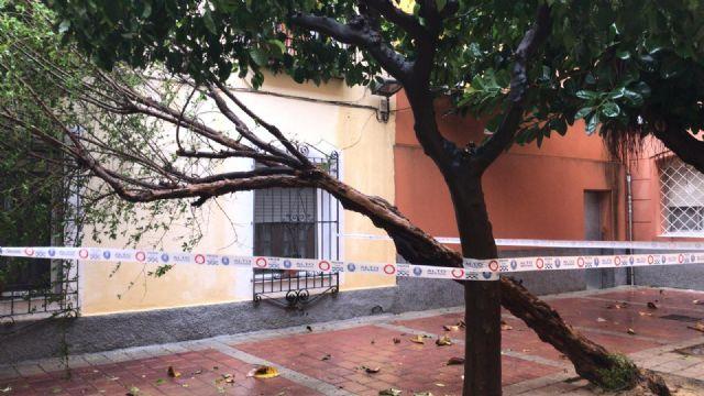 Retiran arbolado y ramas caídas en distintas zonas del municipio debido a las fuertes lluvias - 1, Foto 1
