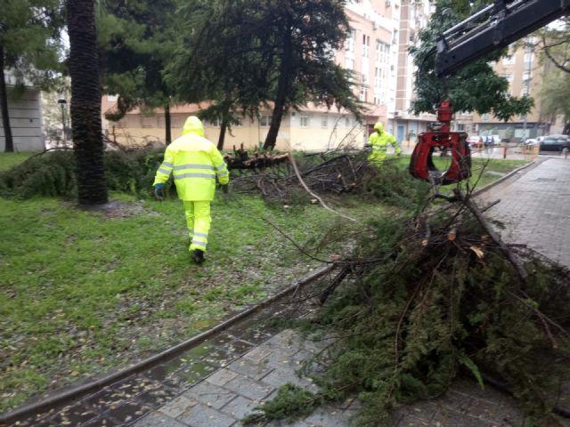 Retiran arbolado y ramas caídas en distintas zonas del municipio debido a las fuertes lluvias - 2, Foto 2
