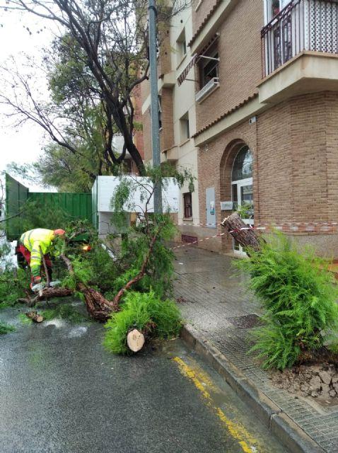 Retiran arbolado y ramas caídas en distintas zonas del municipio debido a las fuertes lluvias - 3, Foto 3