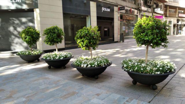 Más de 200 maceteros con 30.000 flores decoran las calles de Murcia - 1, Foto 1